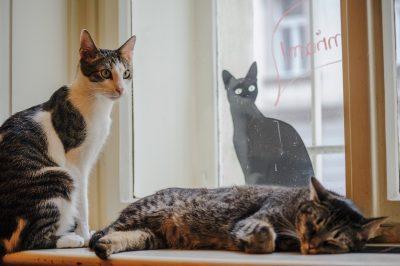 Original Cat Cafe